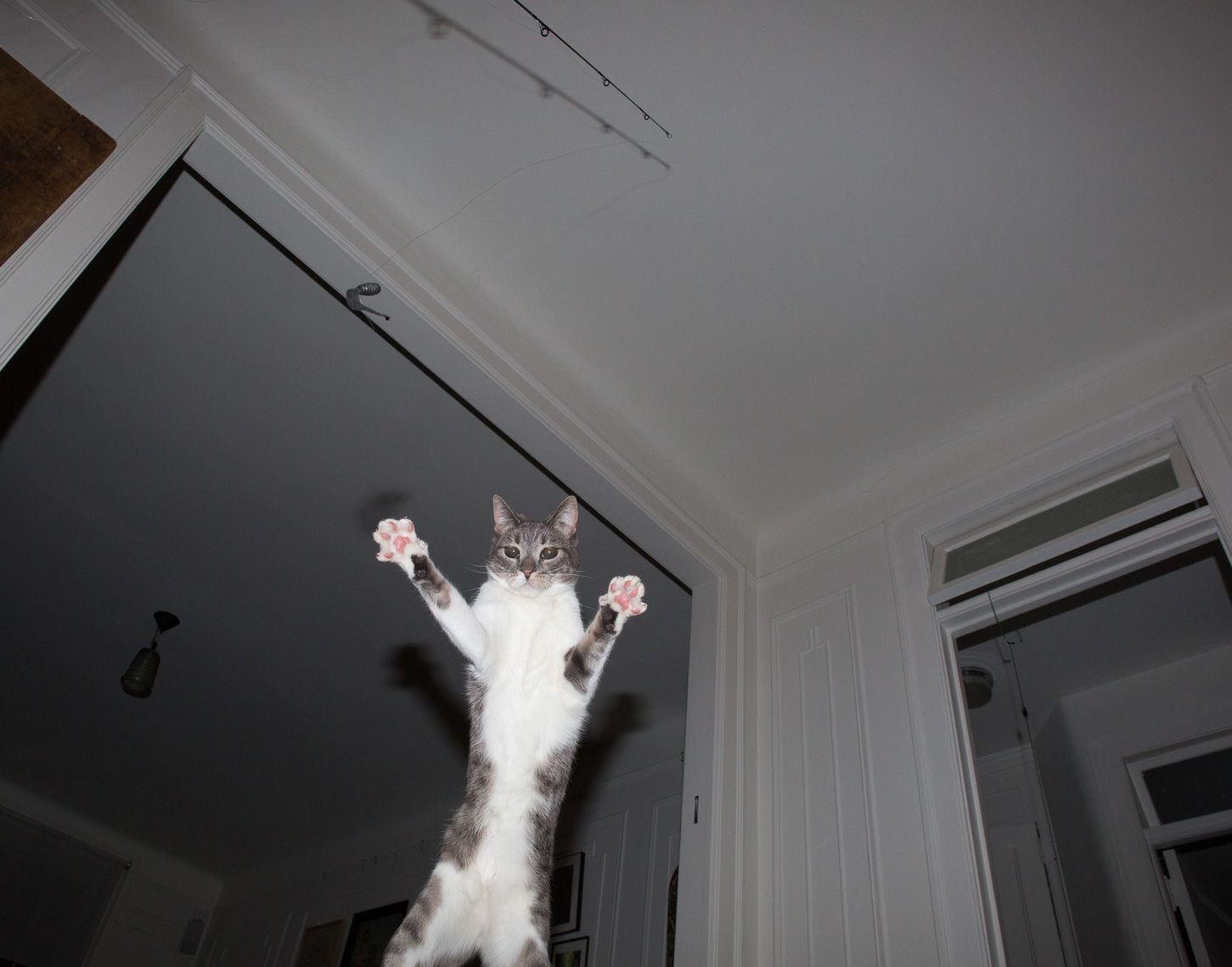 Flying Jumping Acrobatic Awesome Cat